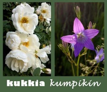 KukkiaKumpikin